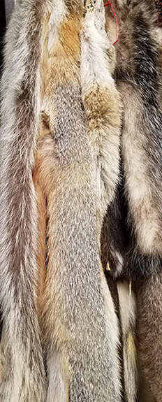 Louisiana furs and pelts